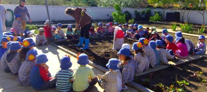Hortas no Jardim de Infância